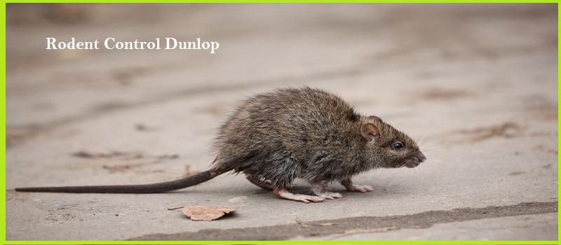 Rodent Control Dunlop